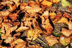 Dry and yellow leaves, autumn background stock photo