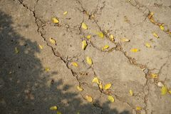 Dry yellow leaves on cracked ground. stock images