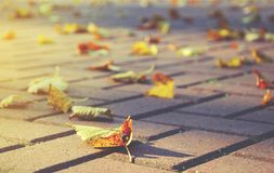 Dry yellow leaves laying on the surface of stone tile road. royalty free stock image