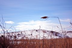 Dry yellow reeds on cloudy sky background, other shore on horizon. Sunny winter day royalty free stock image