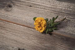 Dry yellow rose on old wooden background Royalty Free Stock Photos
