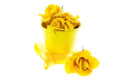 Dry yellow roses and bucket with ribbon Stock Images