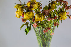 Dry yellow roses Stock Photography