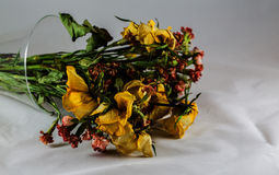 Dry yellow roses Royalty Free Stock Photography