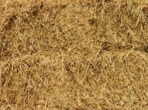 Dry yellow straw grass background. royalty free stock photos