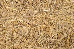 Dry yellow straw grass background texture closeup. stock photography