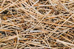 Dry yellow straw grass background texture after havest. Dry yellow straw grass background texture after havest stock photography