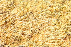 Dry yellow straw grass background texture. After havest Stock Image