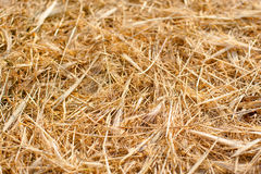 Dry yellow straw grass background texture after havest. Texture hay closeup in color. Fodder for livestock and construction material stock photos