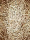 Dry yellow straw grass background texture,. Hay background closeup in color. Straw surface fodder for livestock stock photos