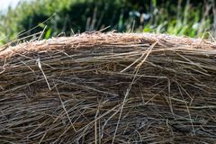Dry yellow straw grass with trees in the background royalty free stock photo