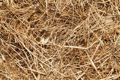 Dry Weeds Abstract Royalty Free Stock Images
