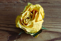 Dry yelloy closeup roses on wood background Royalty Free Stock Images
