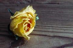 Dry yelloy closeup roses on wood background Stock Photo