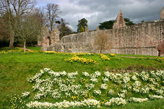 Dryburgh Abbey Royalty Free Stock Photos