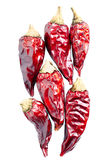 Dryed chili peppers on a white background Stock Images