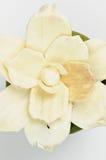 Dryed gardenia flower Royalty Free Stock Photo