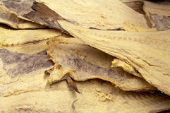 Dryed ha salato i pesci di merluzzo Fotografia Stock Libera da Diritti