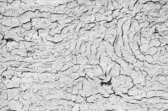 Dryed Land Background royalty free stock image