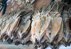 Dryed Molluske. Lizenzfreie Stockfotos