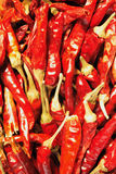 Dryed red pepper Stock Photography