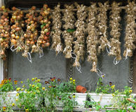 Dryer. Onion and garlic drying in the sun Royalty Free Stock Image