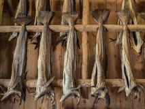 Dryfish som hänger inom på träkuggar i Lofoten öar, Norge, Europa Se mer i min portfölj arkivfoto