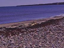 Dryftowa drewniana gałęzatki plaża 3505 fotografia stock