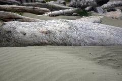 dryftowego drewna piasku. fotografia royalty free