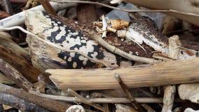 Dryftowy drewno Obraz Stock
