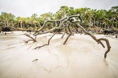 Dryftowy drewno na łowieckich wysp południe Carolina fotografia stock