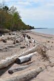 Dryftowy drewno na brzeg Jeziorny przełożony, Michigan fotografia stock