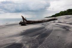 Dryftowy drewno na plaży Obraz Royalty Free