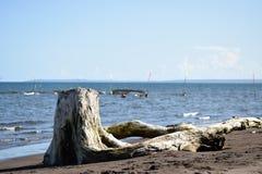 Dryftowy drewno zaciemnia widok ludzie kąpać się na morzu obrazy stock