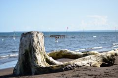 Dryftowy drewno zaciemnia widok ludzie kąpać się na morzu obraz stock