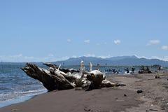 Dryftowy drewno zaciemnia widok ludzie kąpać się na morzu Selekcyjna ostrość fotografia stock