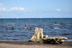 Dryftowy drewno zaciemnia widok ludzie kąpać się na morzu Selekcyjna ostrość zdjęcie royalty free