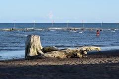 Dryftowy drewno zaciemnia widok ludzie kąpać się na morzu Selekcyjna ostrość zdjęcia royalty free