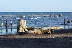 Dryftowy drewno zaciemnia widok ludzie kąpać się na morzu Selekcyjna ostrość obrazy royalty free
