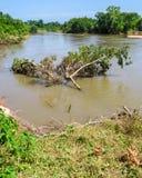 Dryfująca część drzewo few cieki od banka Obrazy Stock