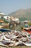 dryied fisk Hong Kong Arkivbild