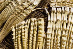 Drying of Bamboo Shoots Royalty Free Stock Photo