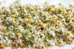 Drying camomile Stock Photo