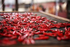 Drying Chili pepper Stock Photo
