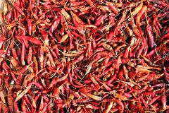 Drying chili peppers Stock Photo