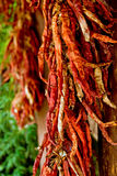 Drying chili peppers on the wall Royalty Free Stock Image