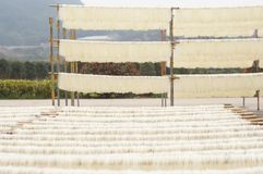 Drying Chinese glass noodles. Drying Chinese vermicelli in a village Royalty Free Stock Photo