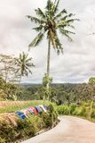 Drying clothes on a rice field. Outdoor laundry. Bali island, Indonesia. stock photo