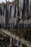 Drying cod fish on wooden racks - Reine - Lofoten - Norway