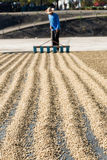 Drying coffee beans Royalty Free Stock Photography